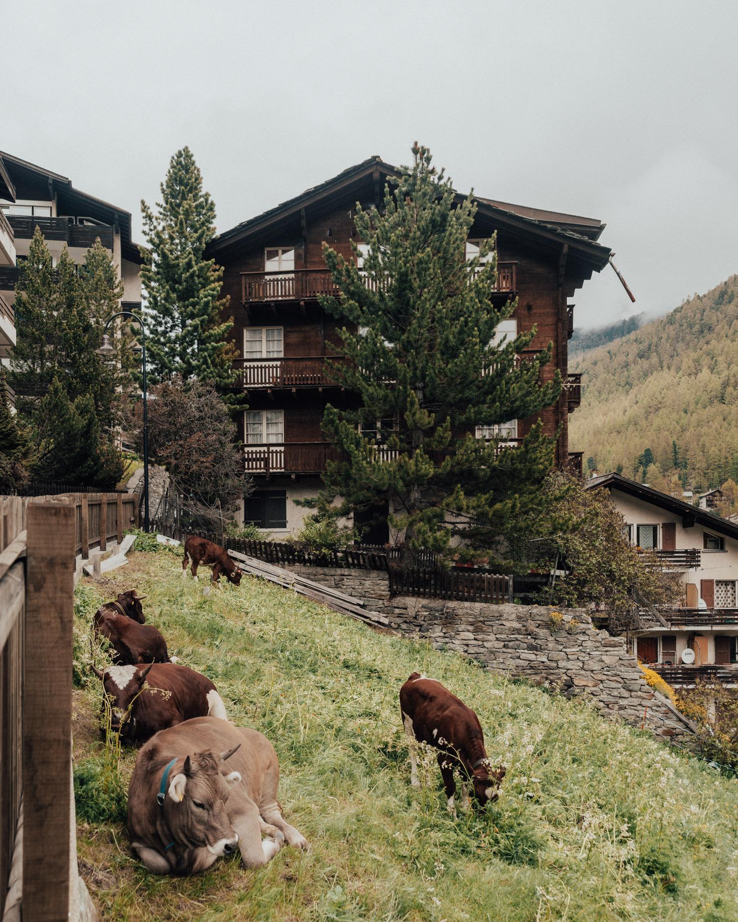 Kor i Zermatt