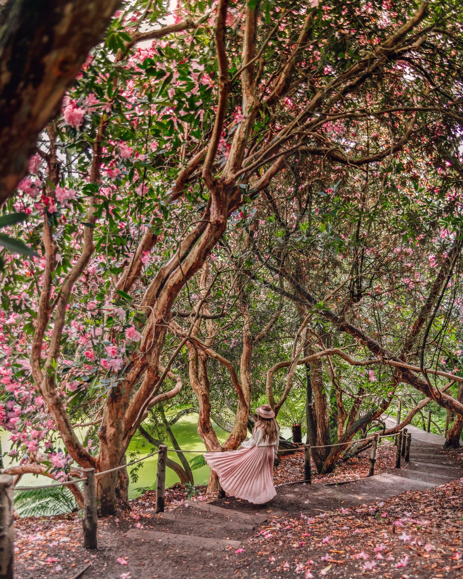Djungeln i The Lost Gardens of Heligan   Fantastiska Instagramplatser i Cornwall, England