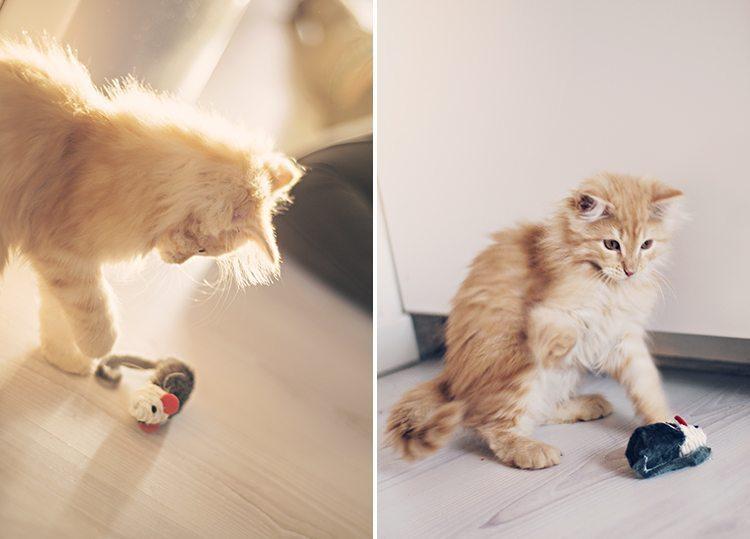 cutest-kitten
