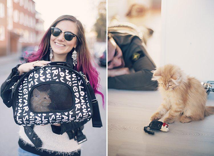 cutest-kitten-ever