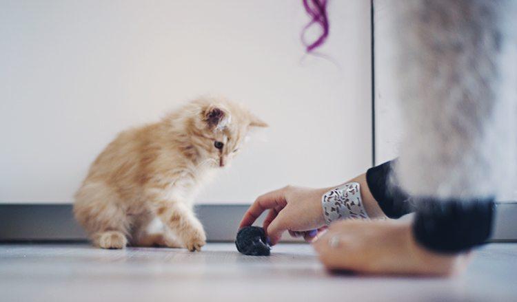 cutest_kitten