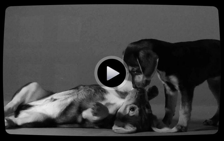 first-lick-first-kiss-parody
