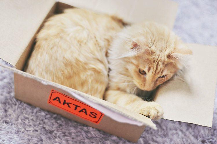 cat-in-a_box