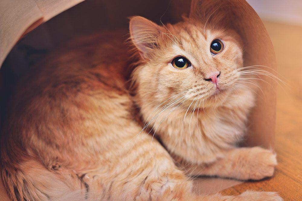 Katt - julklappsinslagning