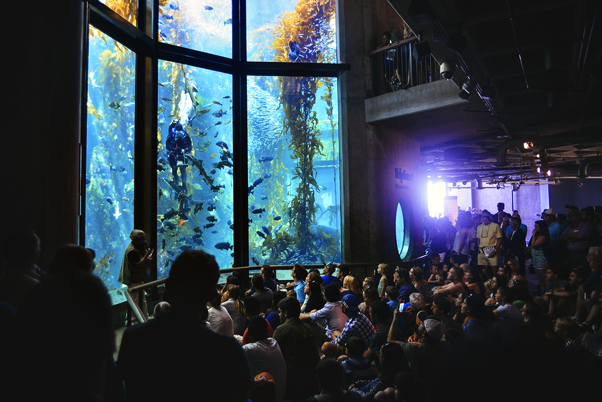 Monterey Bay Aquarium The Kelp Forest