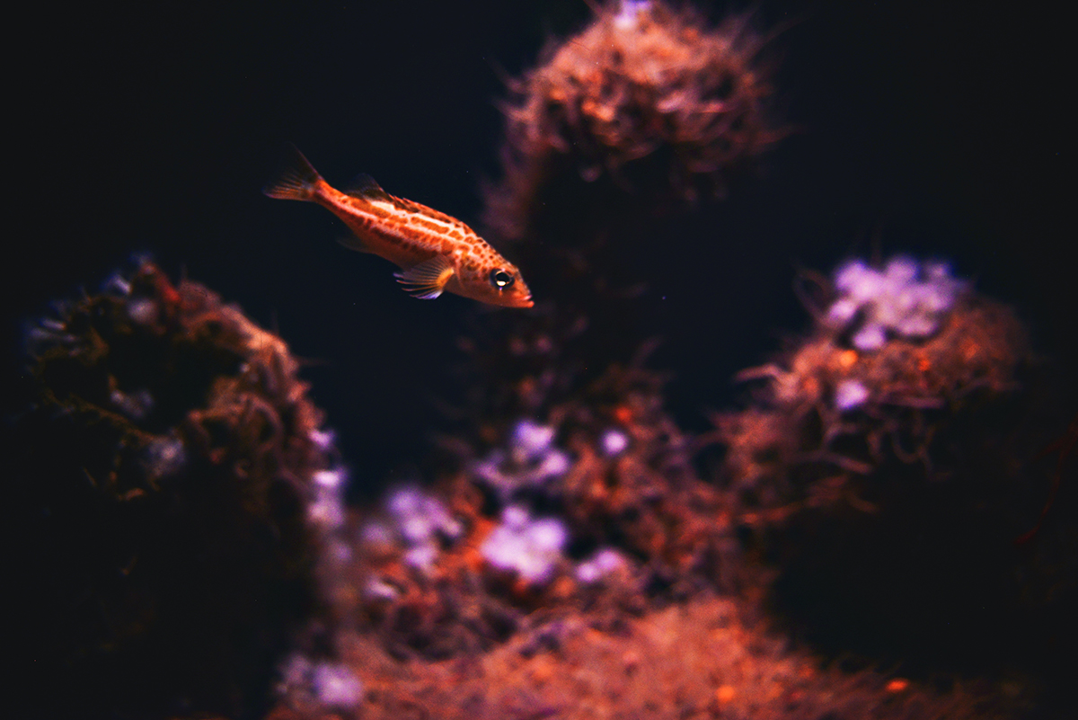 Fish in Monterey Bay's Aquarium