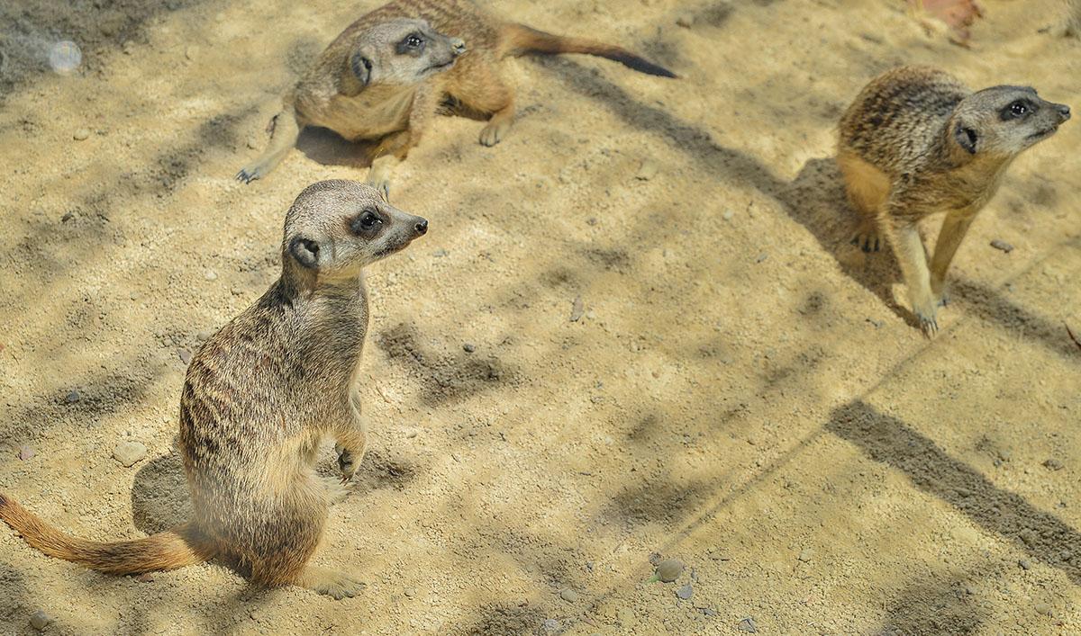 Animal Park in Benidorm, Costa Blanca