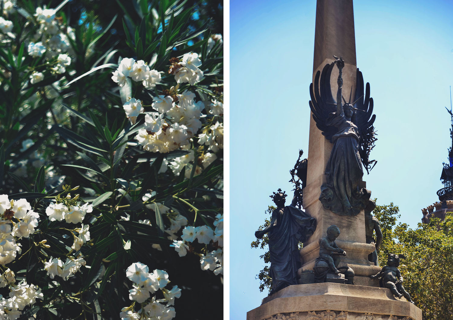 White flowers and an angel statue in Barcelona