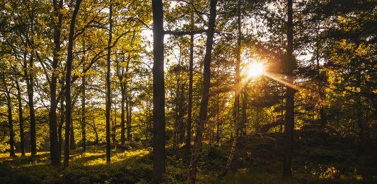 Bli mer miljösmart