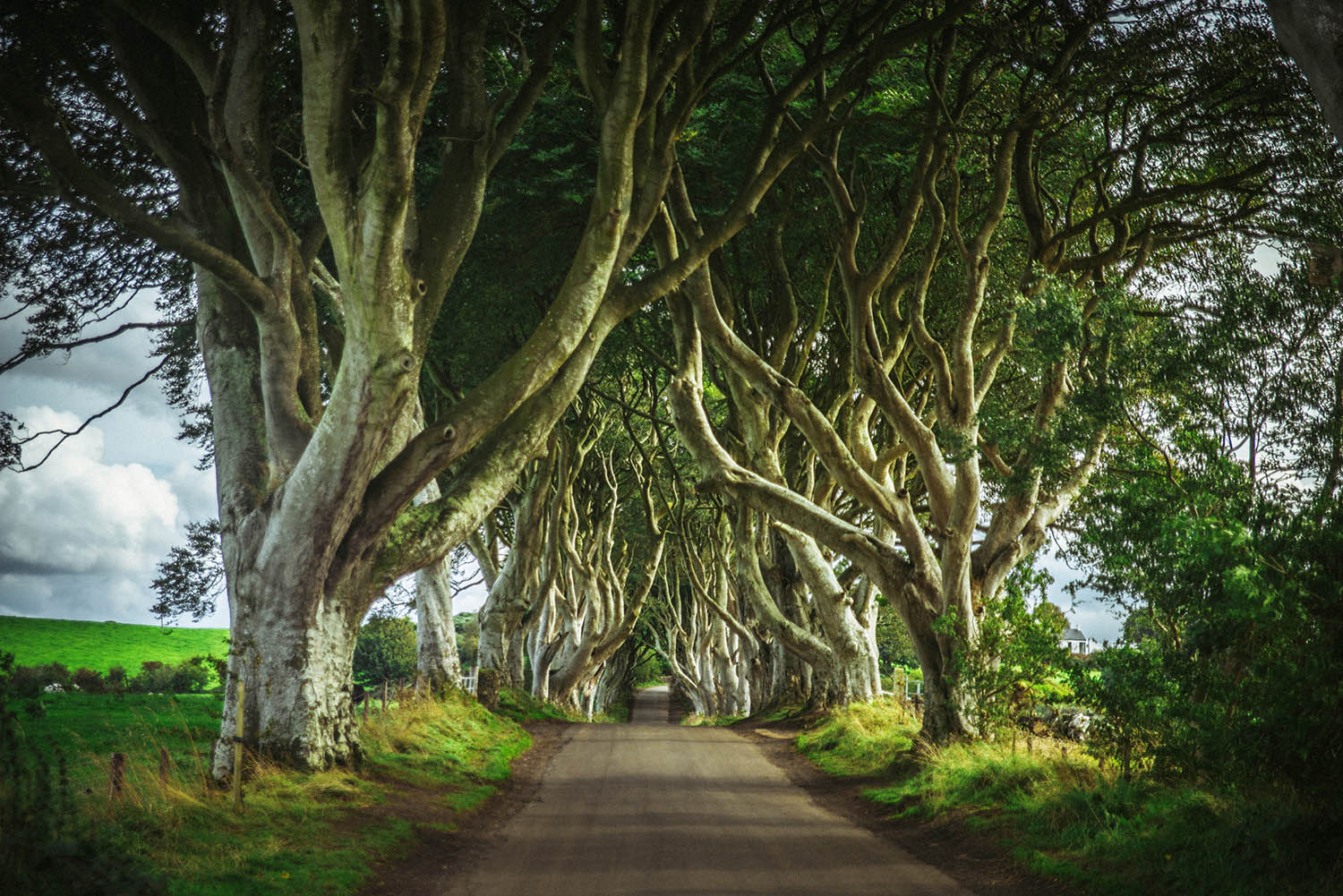 The Dark Hedges in Northern Ireland - A magical place and Game of Thrones filming location
