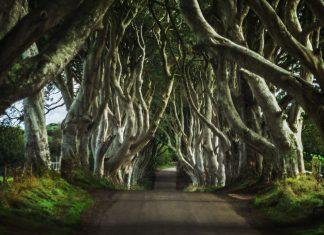 The Dark Hedges in Northern Ireland
