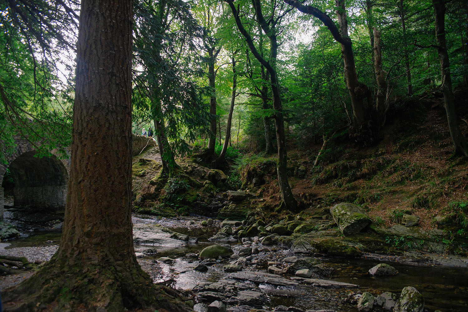Tollymore Forest Park - Game of Thrones Filming Location by Altavaddy Bridge