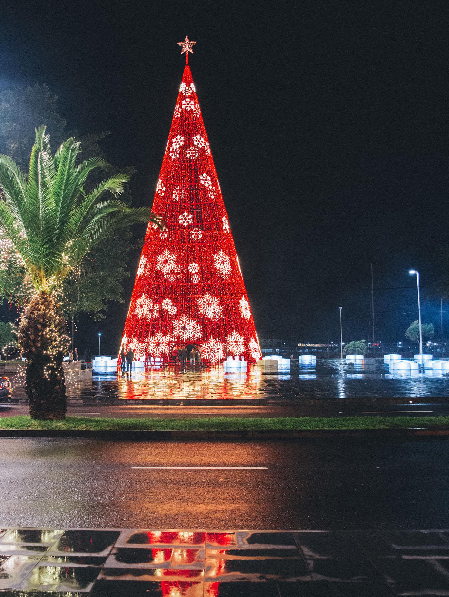 Christmas Light Tree Madeira