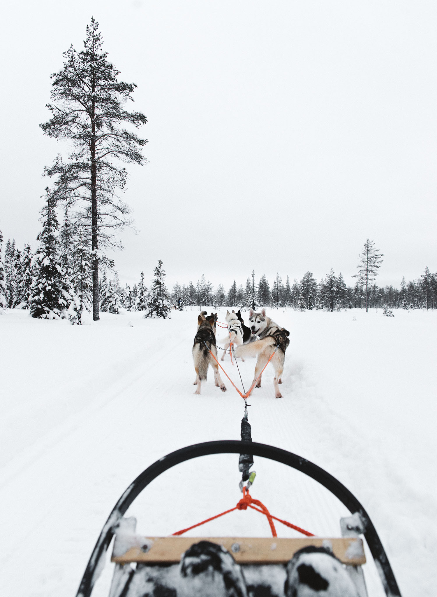 Husky Safari in Lapland, Finland