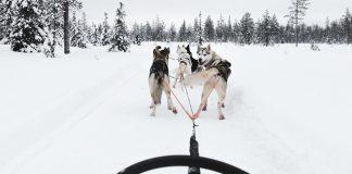 Husky Safari - Things to do in Oulu / Saker att göra i Uleåborg