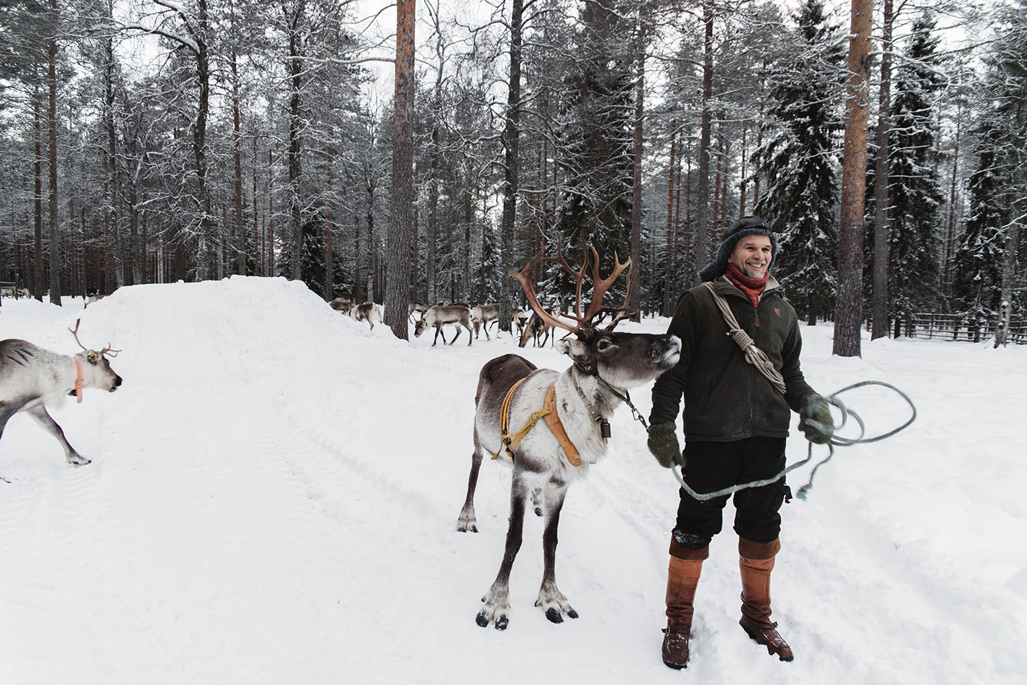 Reindeer farm Poro-Panuma - close to Oulu