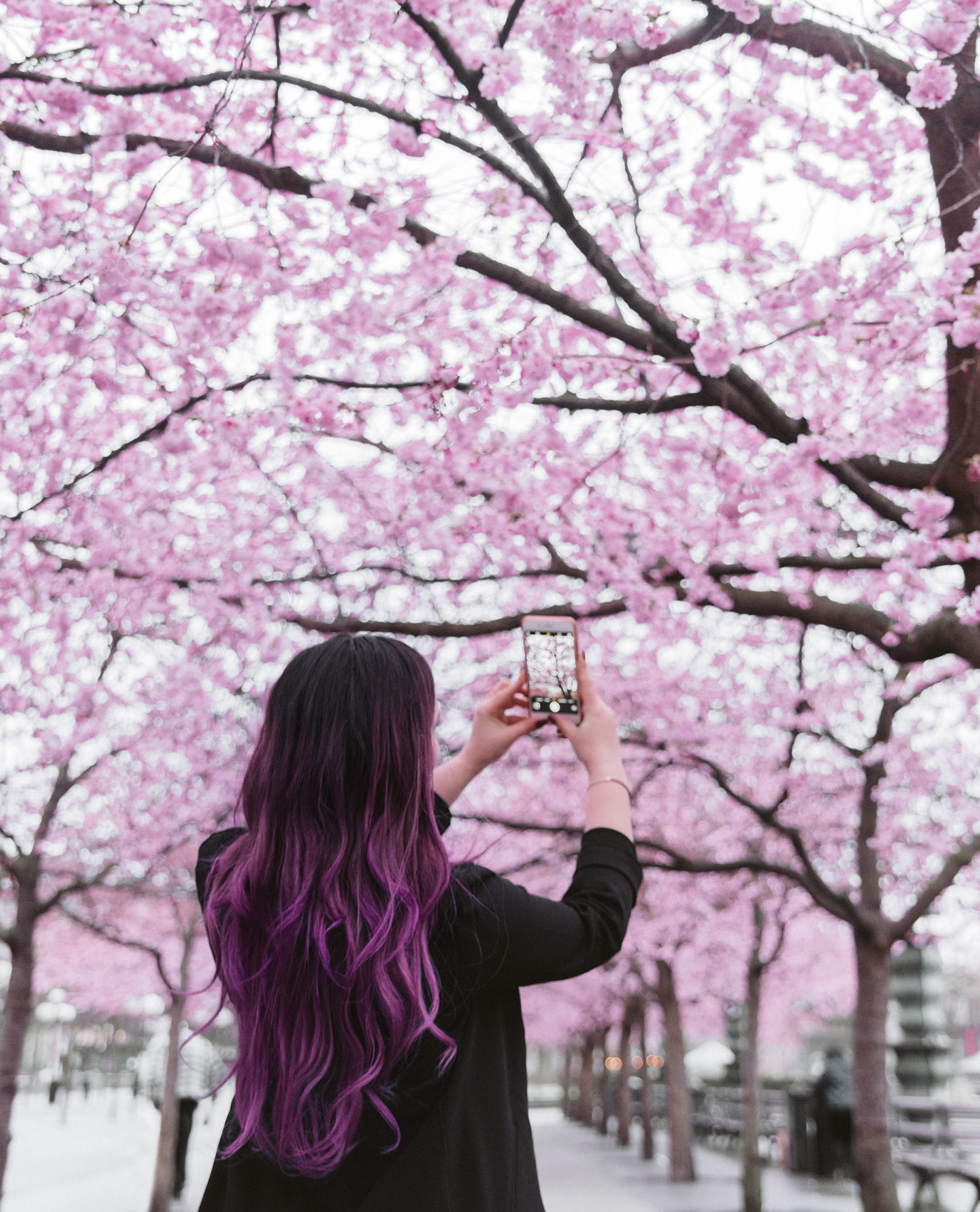 Girl with purple balayage standing under pink cherry blossoms