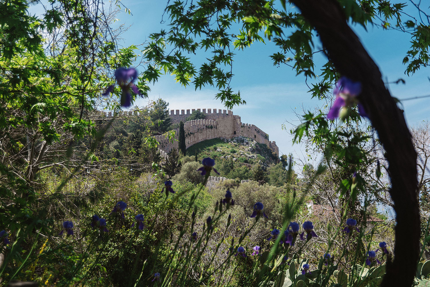 Alanya Castle - with flowers in the foreground