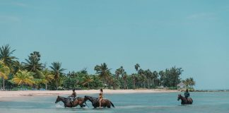 Swimming with horses in Jamaica
