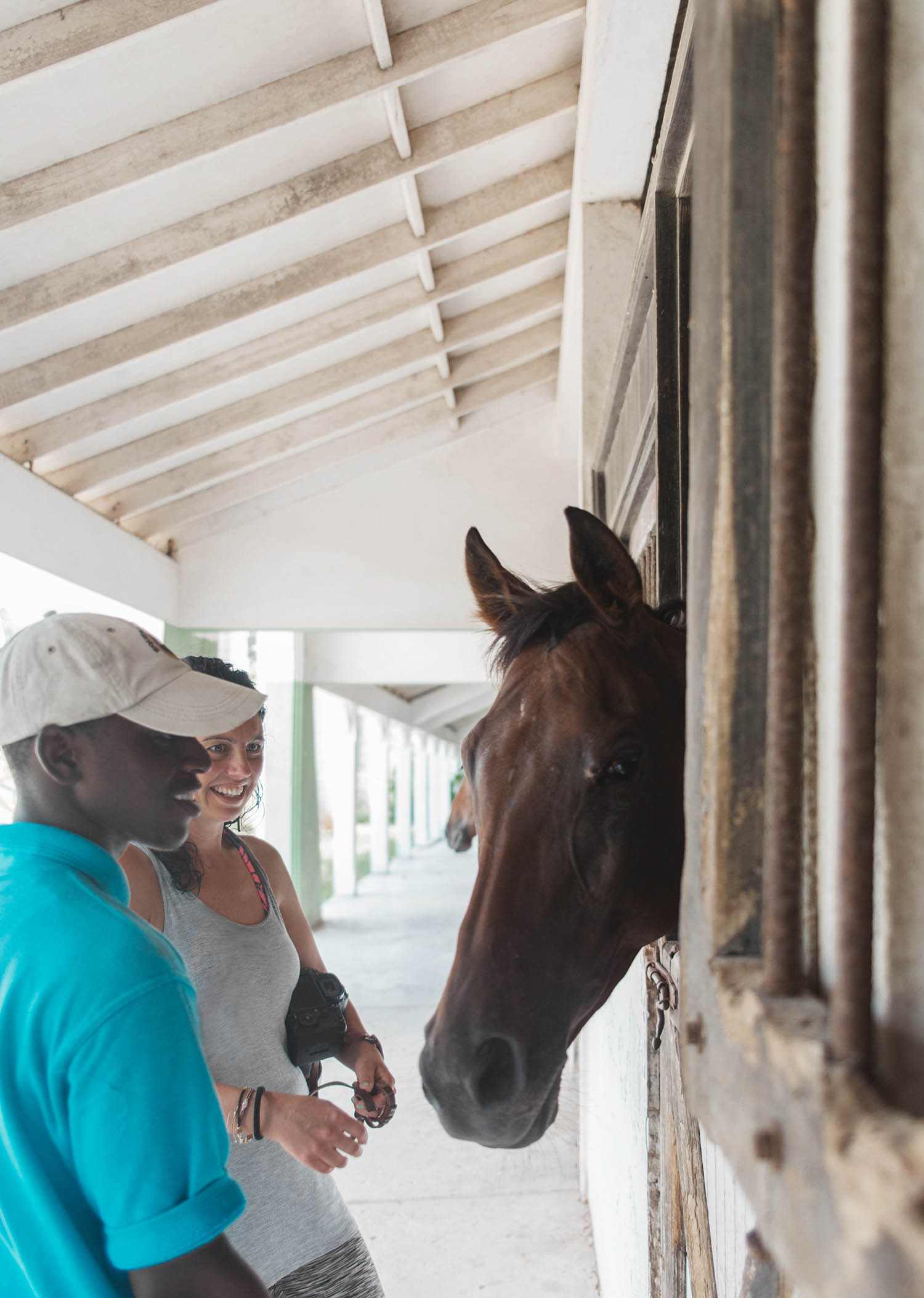 Horse in Stable - Half Moon Equestrian Centre