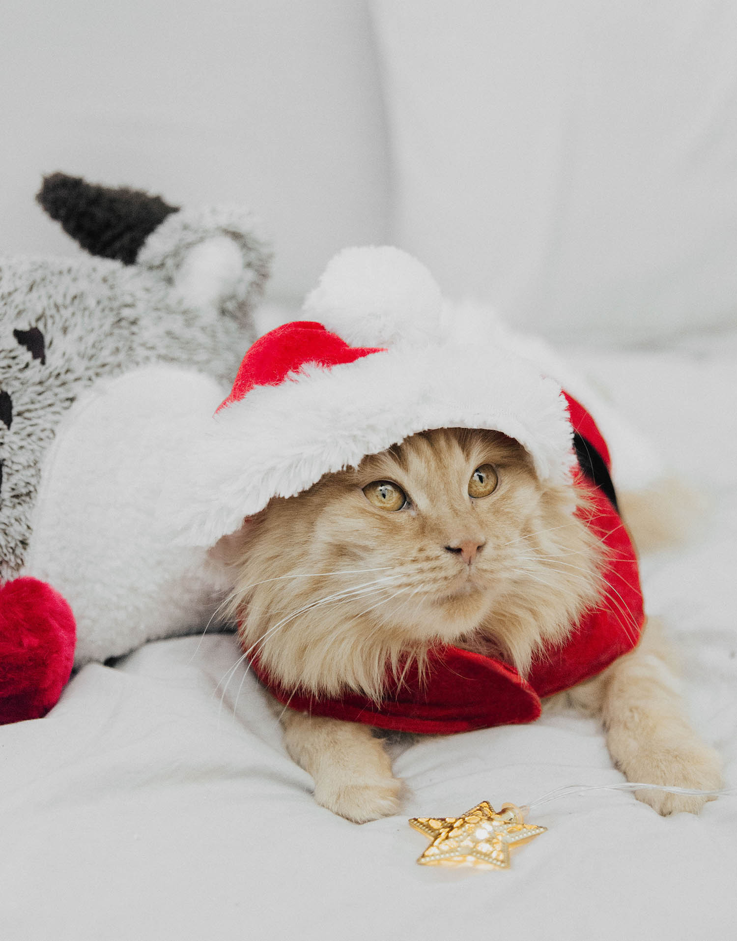 Christmas Cat with Santa Claus Clothes
