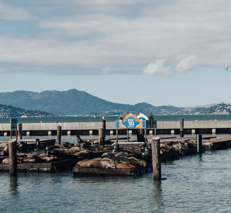 Seals by Pier 39, San Francisco
