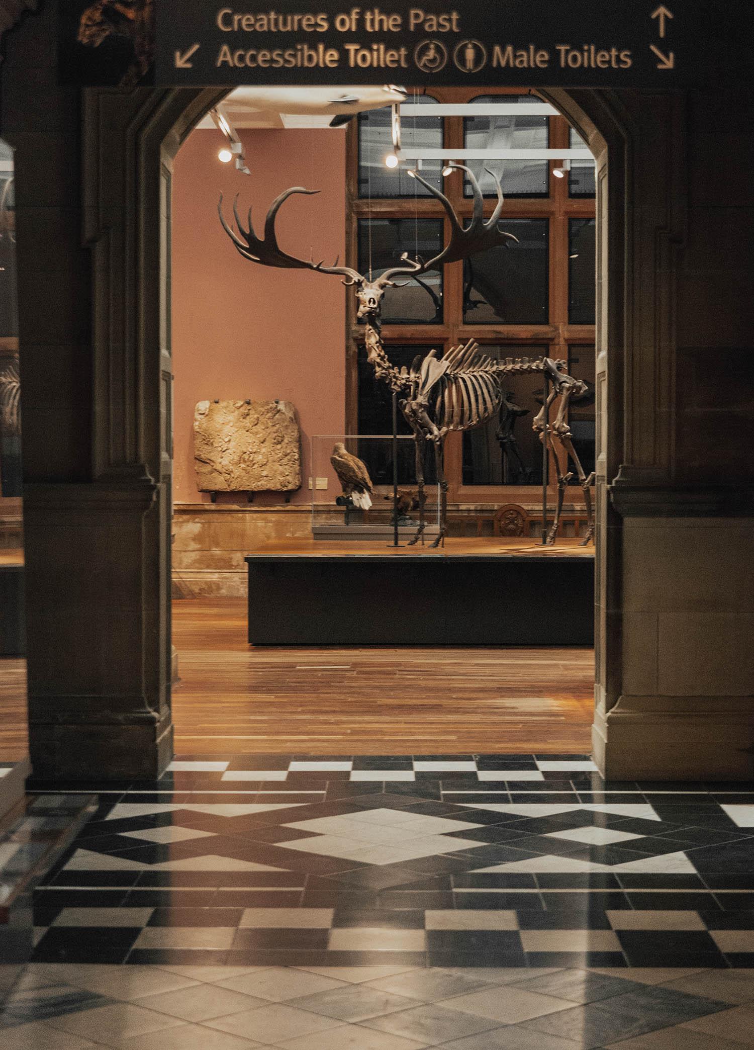 Skeleton in Kelvingrove Art Gallery and Museum, Glasgow, Scotland