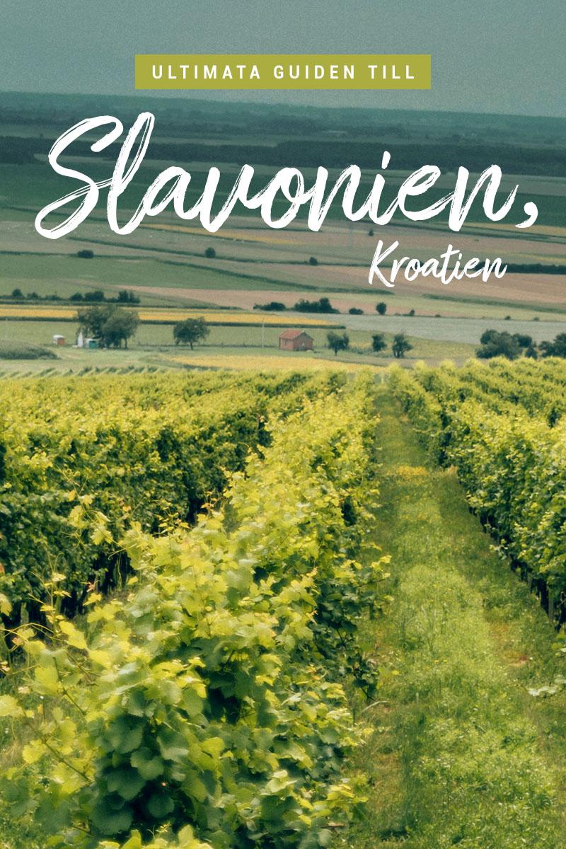 Ultimata guiden till Slavonien & Baranja i Kroatien