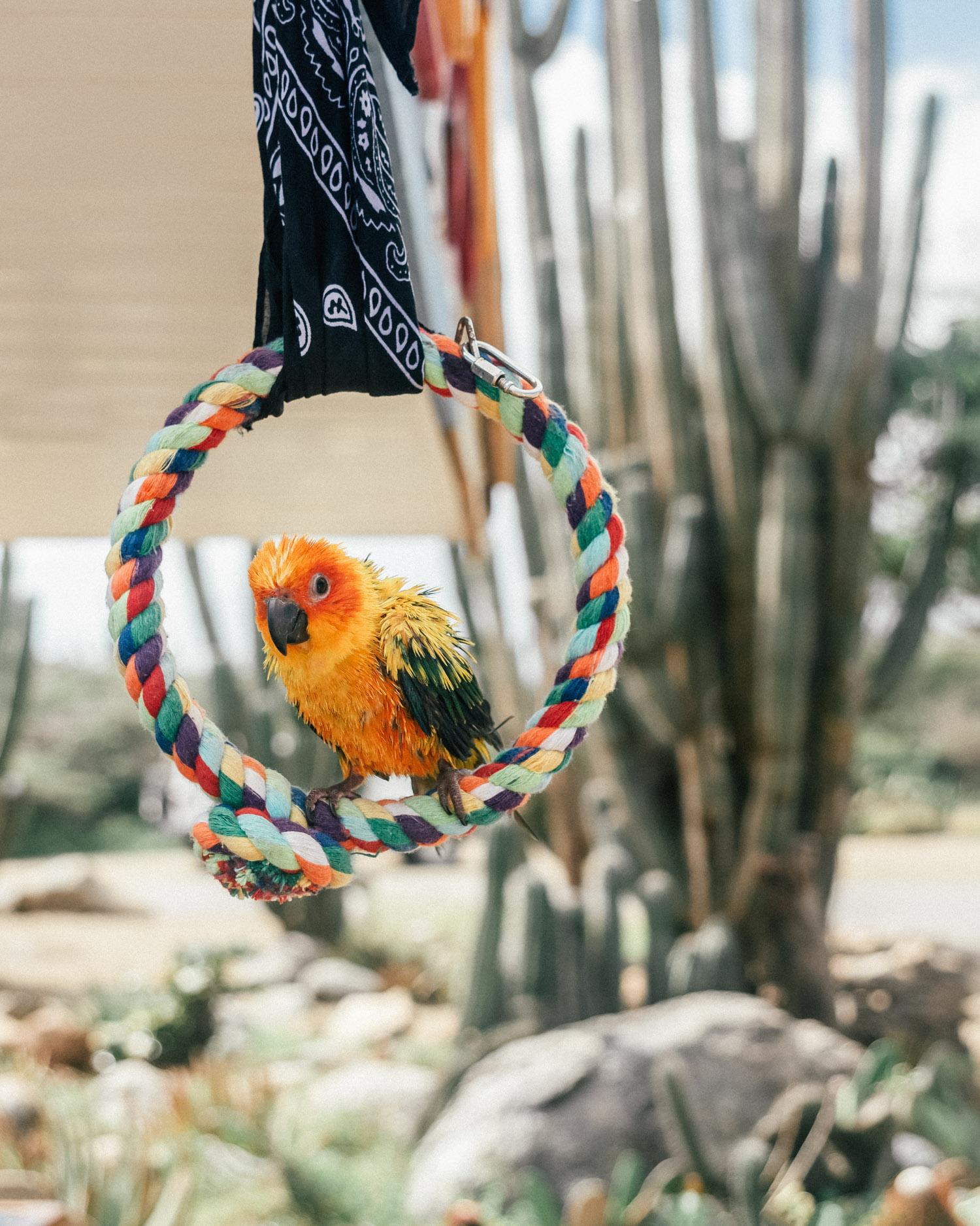 Parrot, Alto Vista Chapel