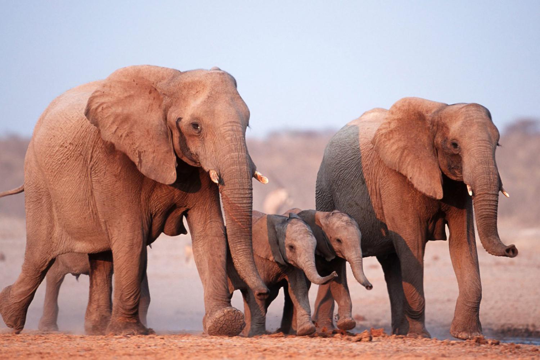Ge bort fadderskap hos WWF