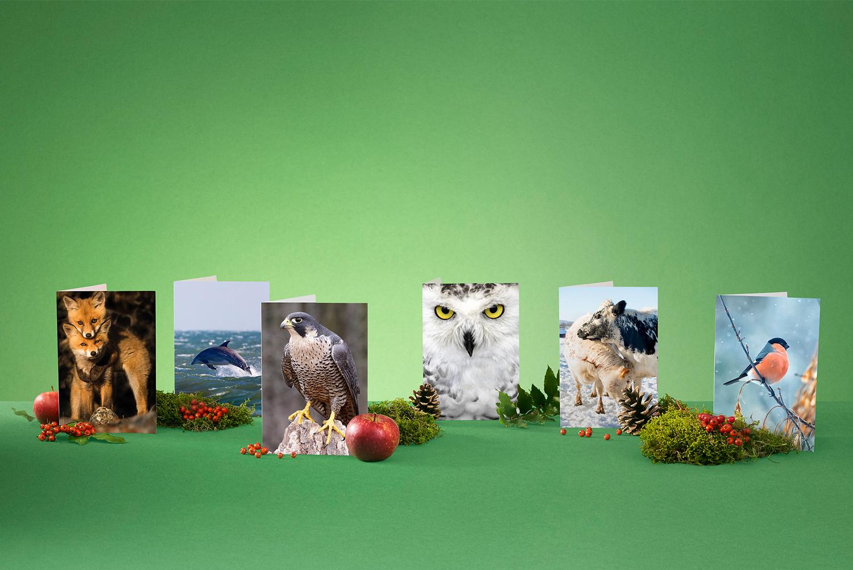 Ge bort medlemskap i Naturskyddsföreningen|Hållbara julklappar