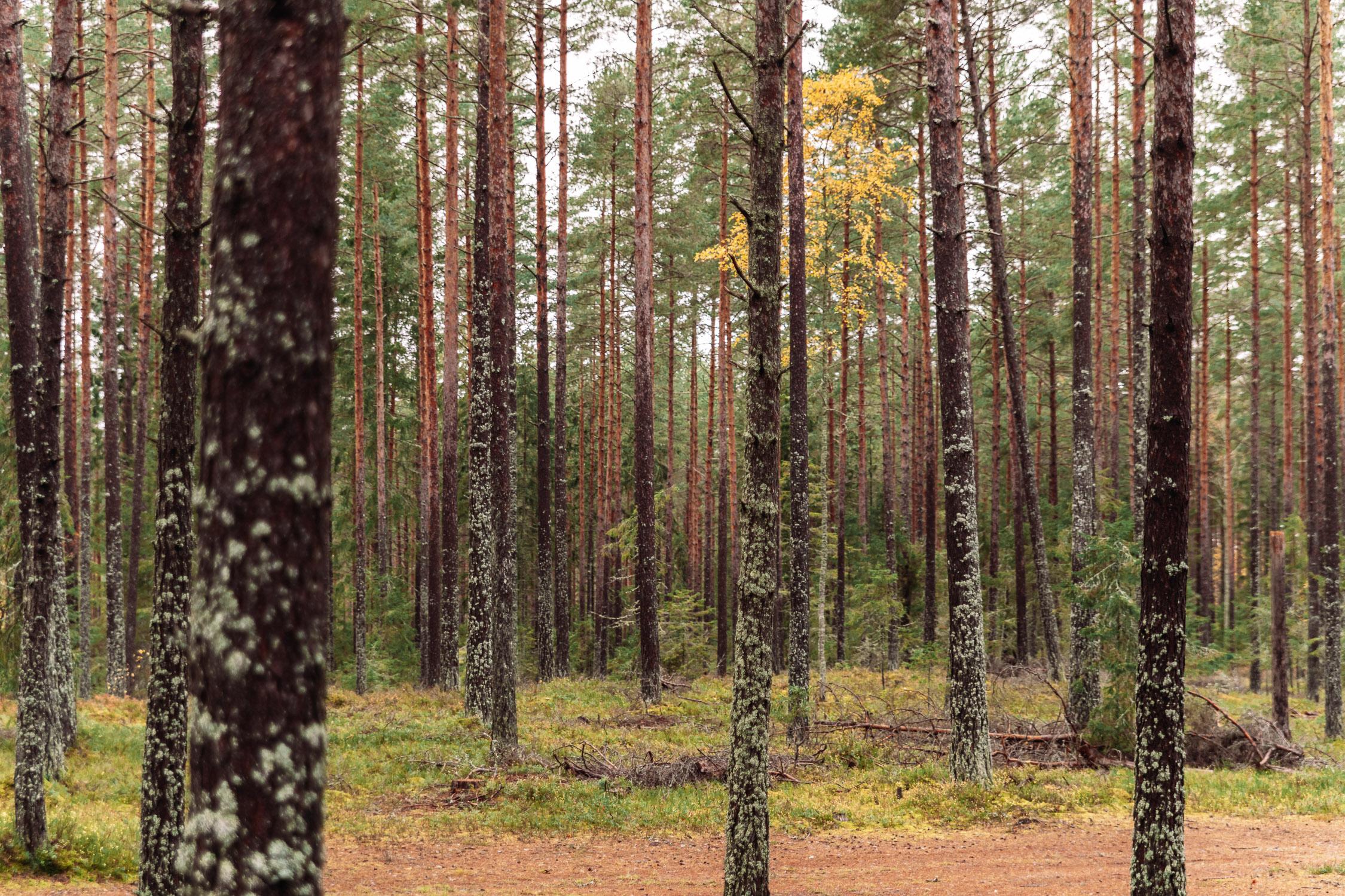 Skog i Brevens Bruk, Örebro