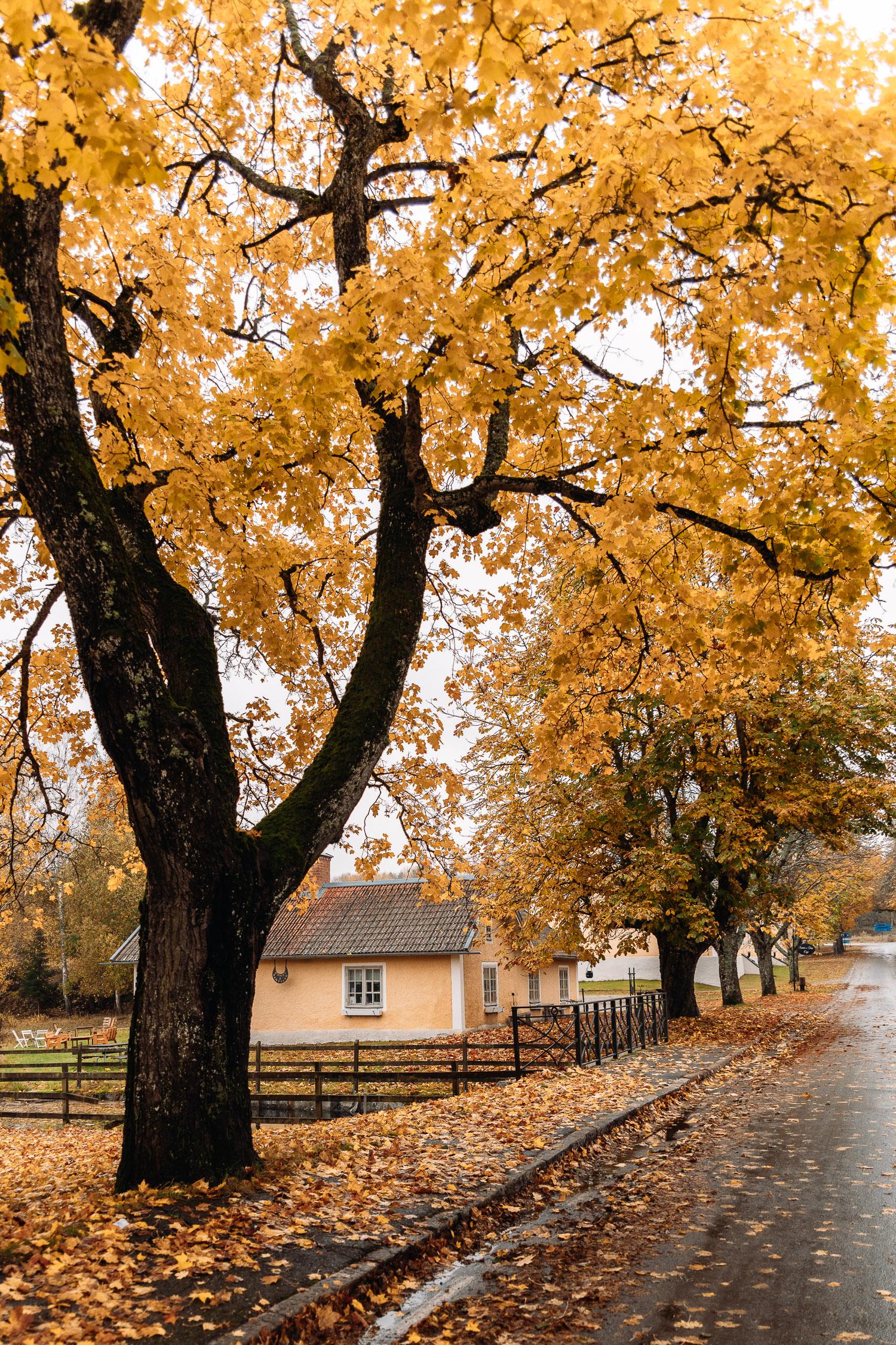 Idyllisk bruksmiljö med gula höstträd i Brevens Bruk - Tips på saker att göra i Örebro län