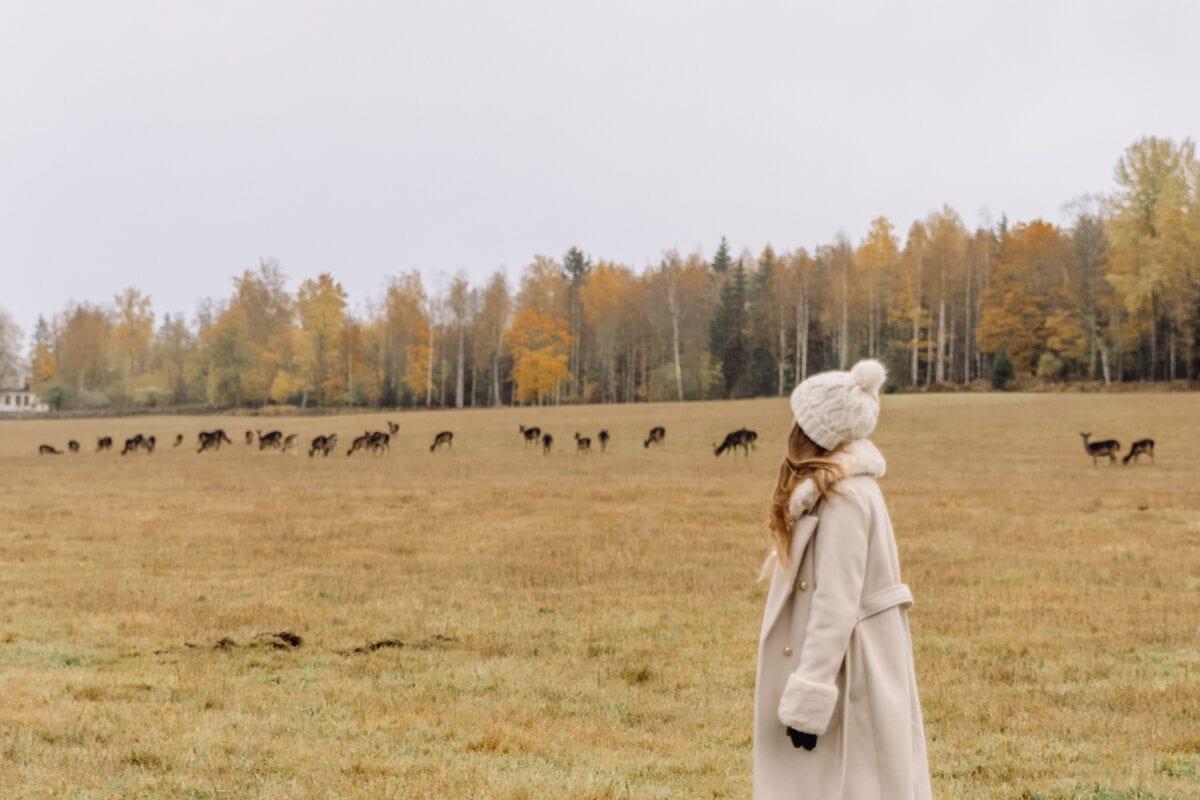 Ida Eriksson iklädd vit kappa och mössa blickar ut mot dussintals dovhjortar på gräsäng i Brevens bruk, Örebro