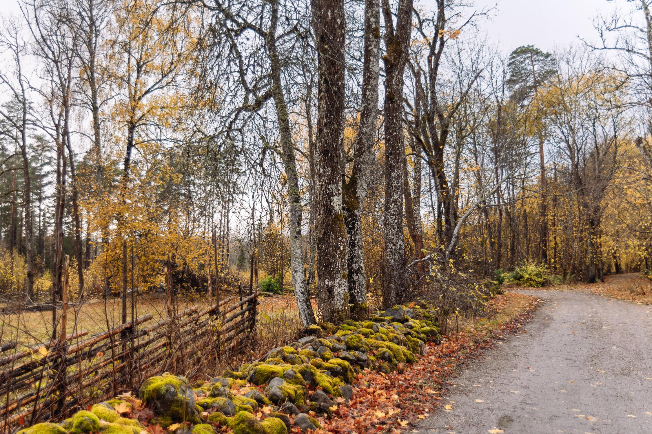 Höstig vy med grön mossa och gula höstträd i Garphyttans nationalpark, Örebro kommun