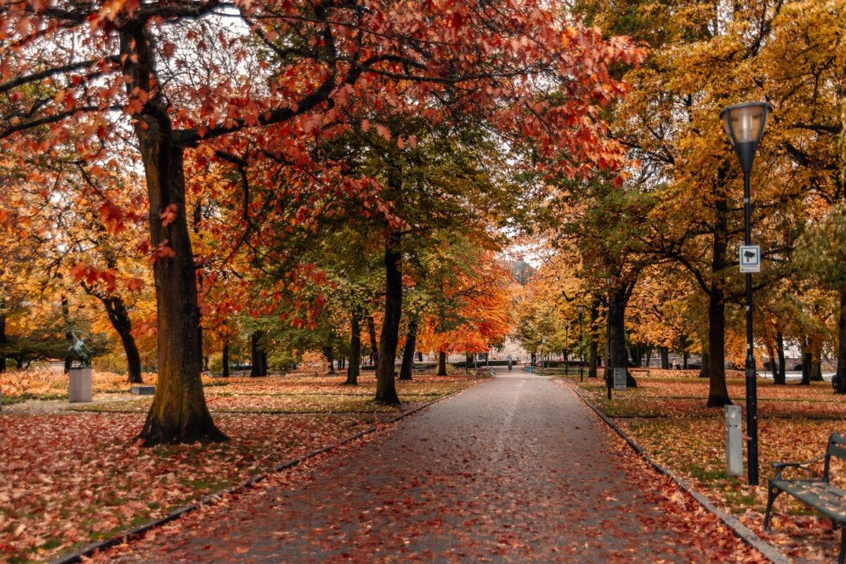 Vackra stadsparken i Örebro med färgglada höstlöv så långt ögat kan nå